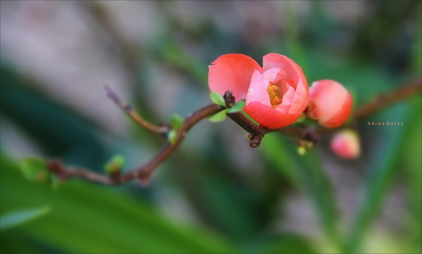flower, spring, macro