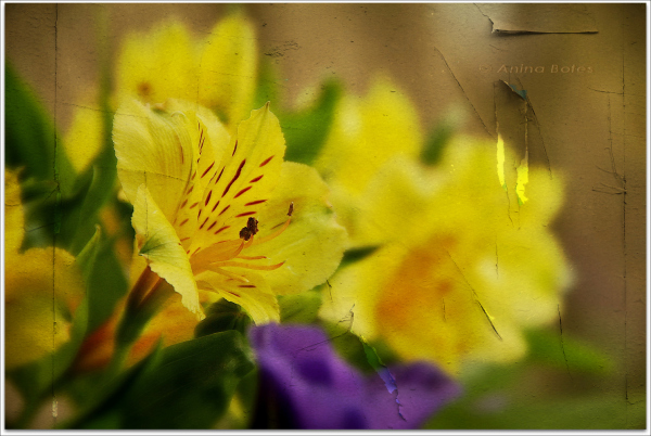 flower, photoart