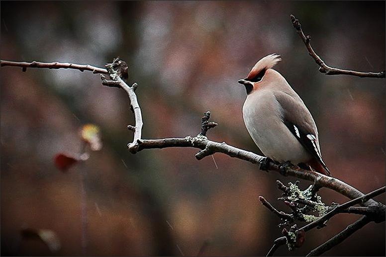 bird, garden, 6d