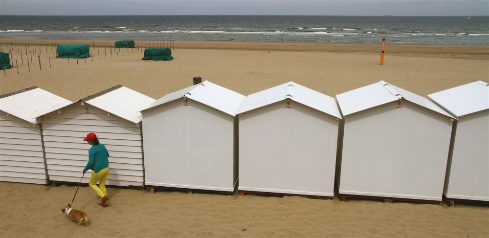 mer plages ostende animaux chiens