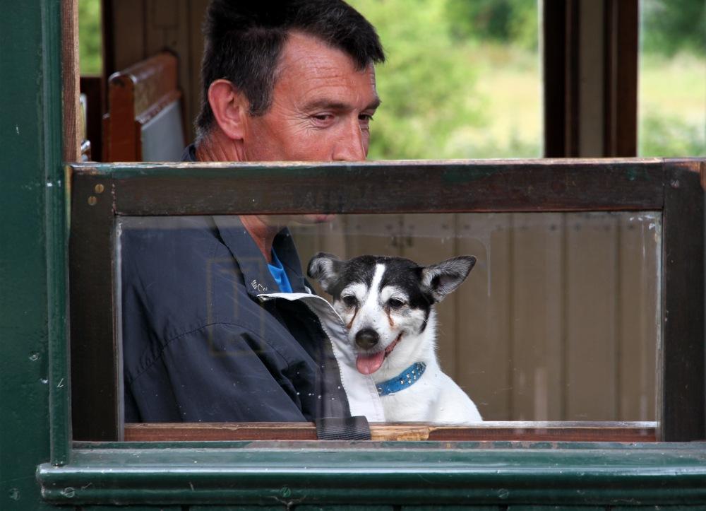 Le petit chien du petit train