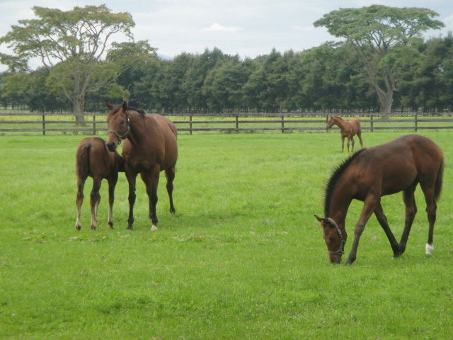 Young horses eating grass in a ranch