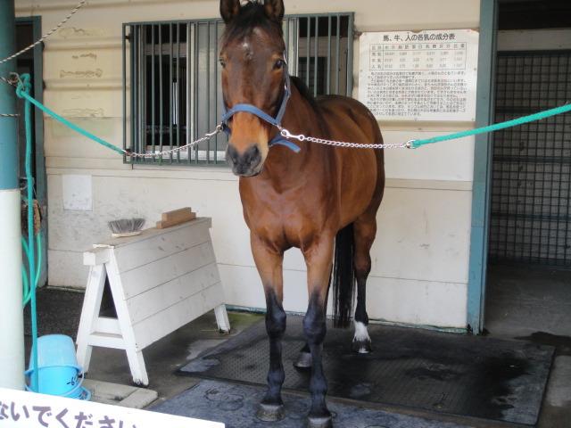 Robin the Retired Horse