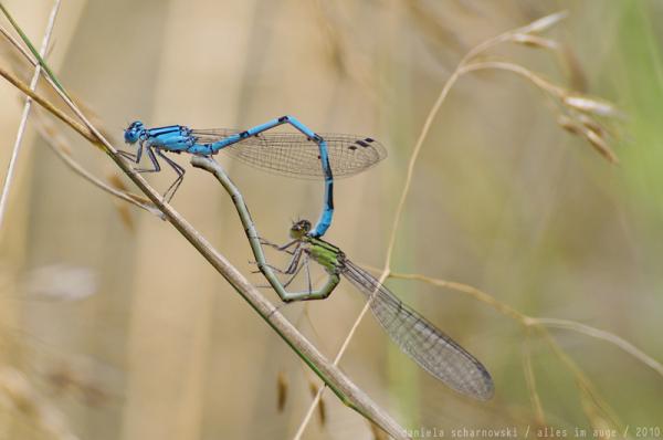 mating wheel - no flash