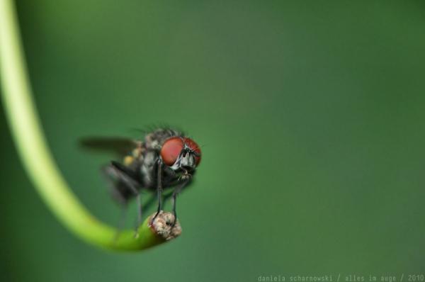 fly swing