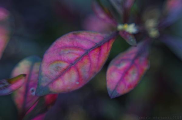 parrot leaf