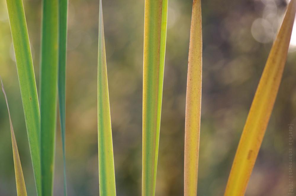 autumn palette II