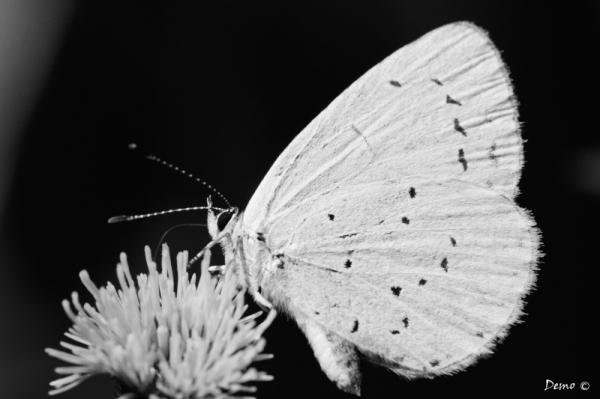 Le grand blanc