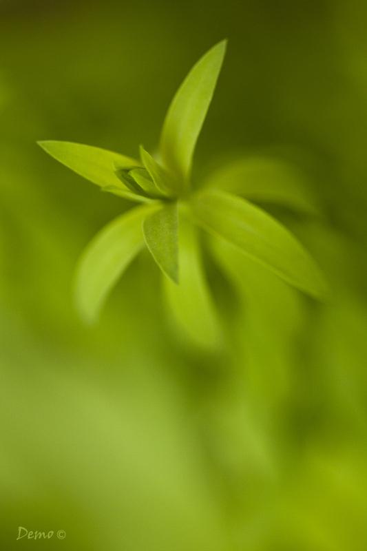 Planète verte- (1/7)