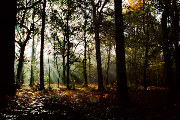 forest, nature,  Stéphane Desrumaux, Demophoto
