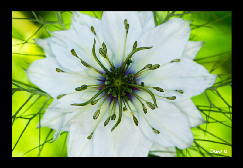 macro, demophoto, fleur