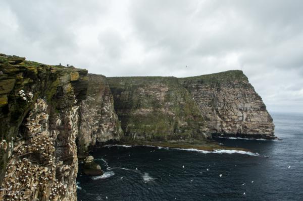 Noss island- Shetland