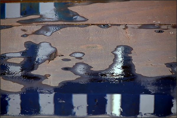Flaques d'eau dans l'enclos (5)