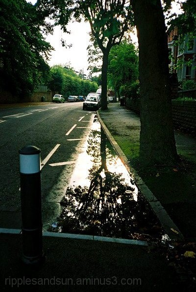 tree and reflection