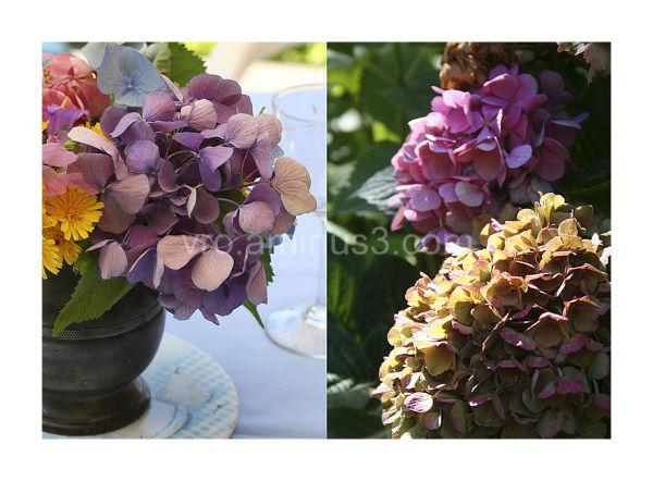 De la fleur à la table