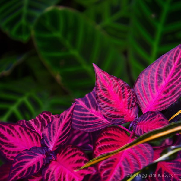 Hothouse Color