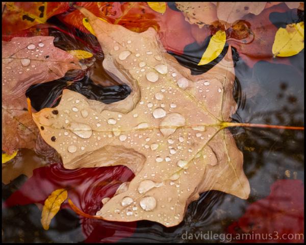 Wet Autumn