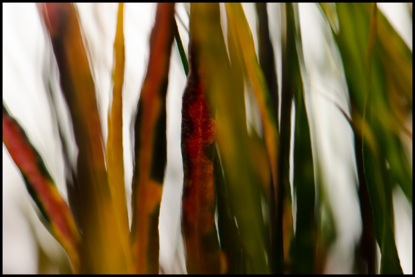 Chromatic Fronds