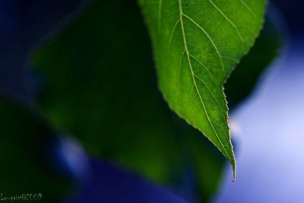 La beauté des feuilles II