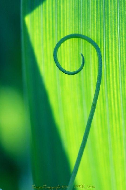 Plant Art 3/7