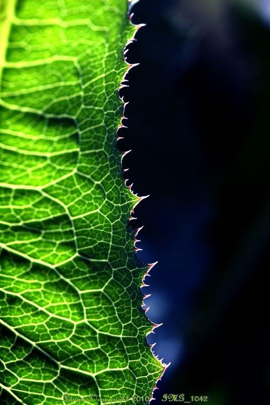 Lumières Chlorophylles .../Fin.