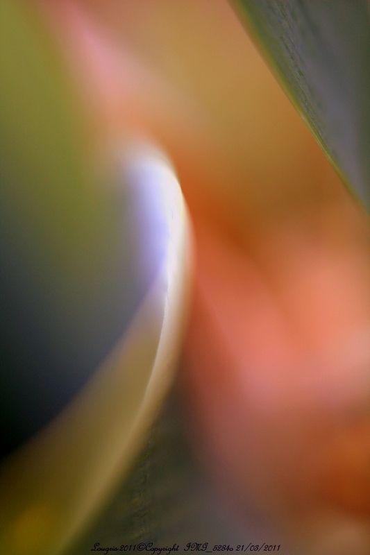 Iris-Impression rétinienne I