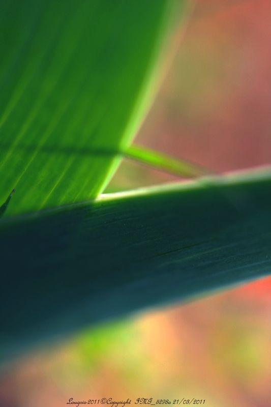 Iris-Impression rétinienne VII