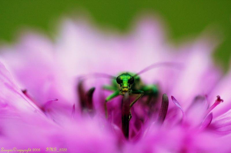 En vert et contre tous
