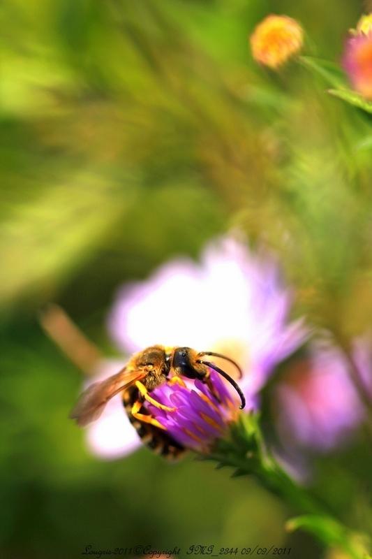 La vie est une fleur que l'on butine.