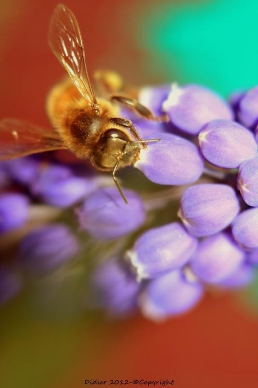 Sous l'arc en miel.