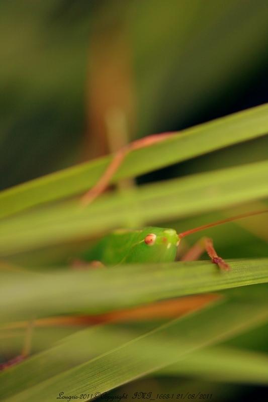 Vert ...l'intérieur.