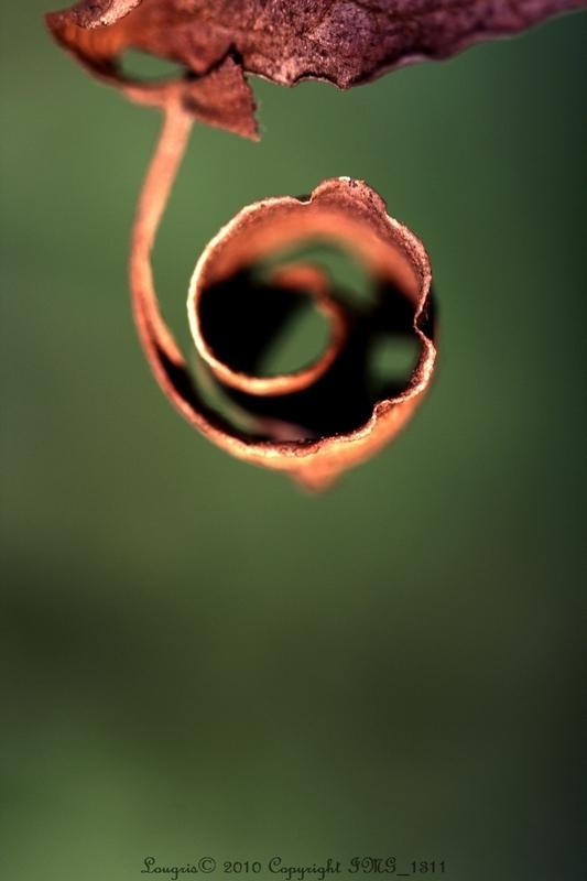 Végétal abstract.