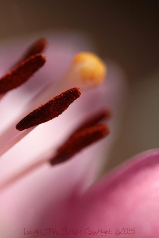 Et fleur mes rêves - VIII