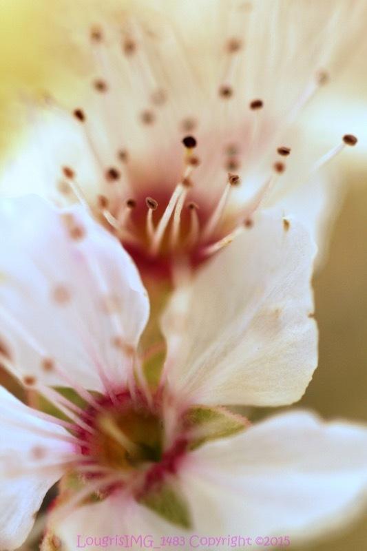 Et fleur mes rêves - X