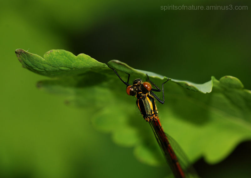 Dragonfly (3)