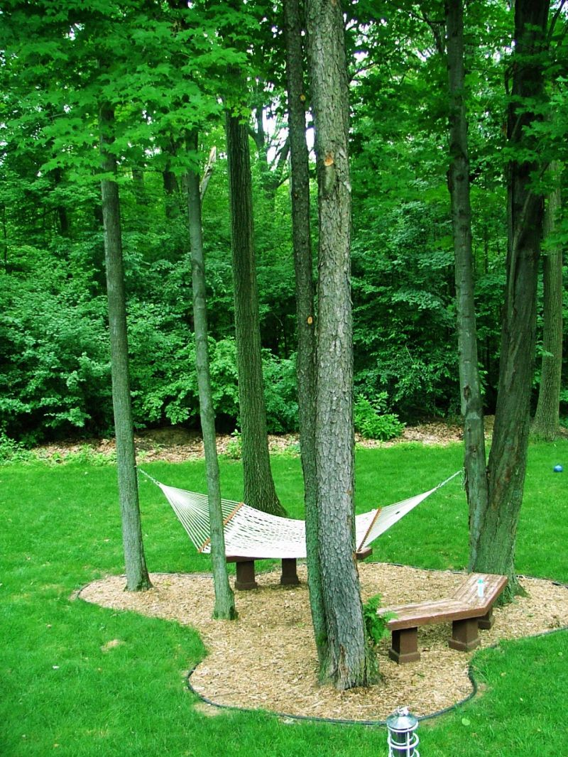 My backyard in the summer