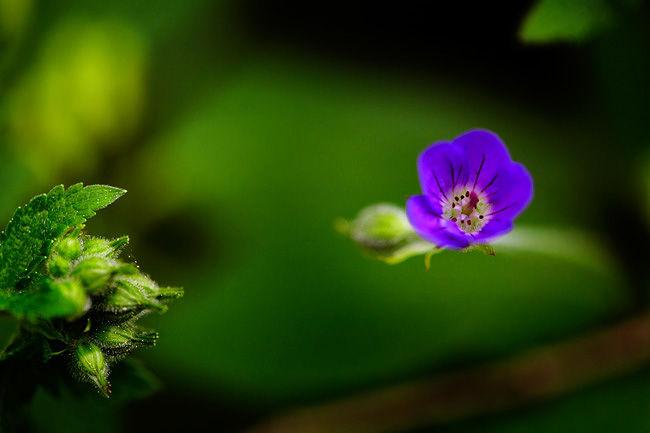 -Flower-