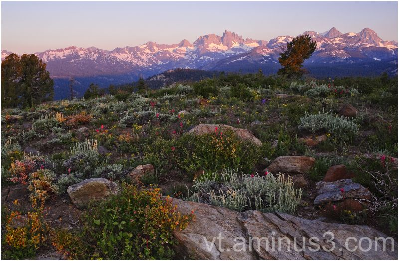 Summer Dawn over Ritter Range, Sierra Nevada, CA