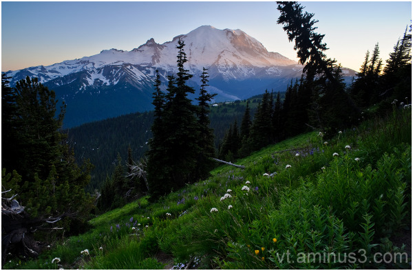 Summer Meadow beneath Mt. Rainier, WA