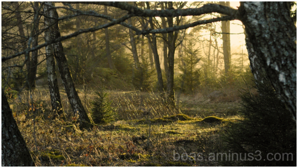 Evening light  Horred Sweden