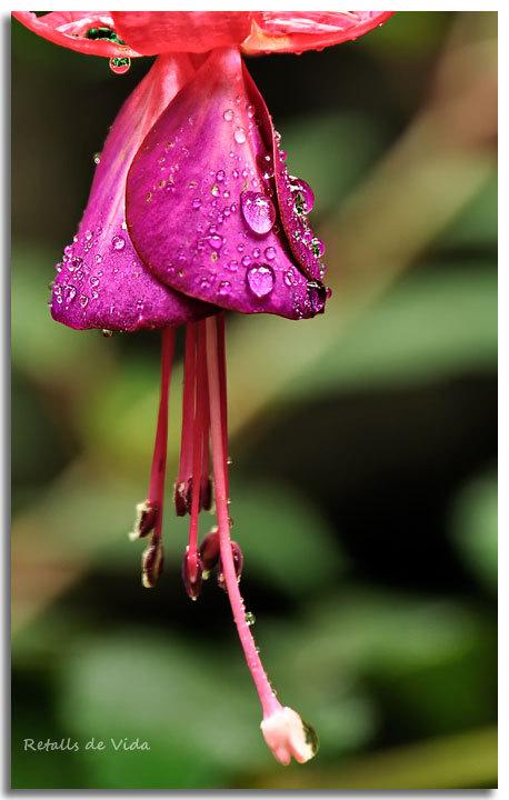 Plou sobre mullat