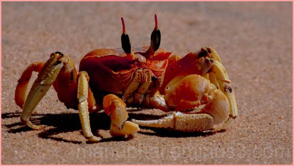 Crab - Beach encounter