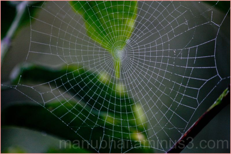Spider Web - Early Morning Shot
