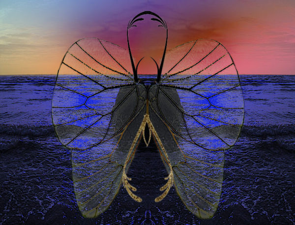 The Bug...