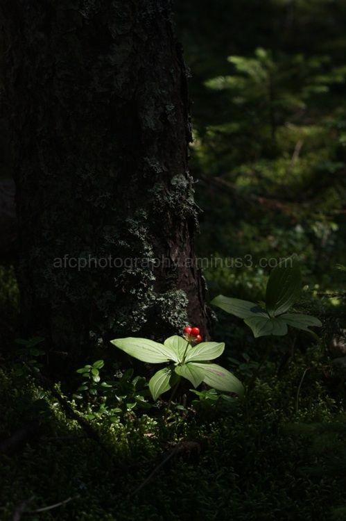 Seedling caught in the light
