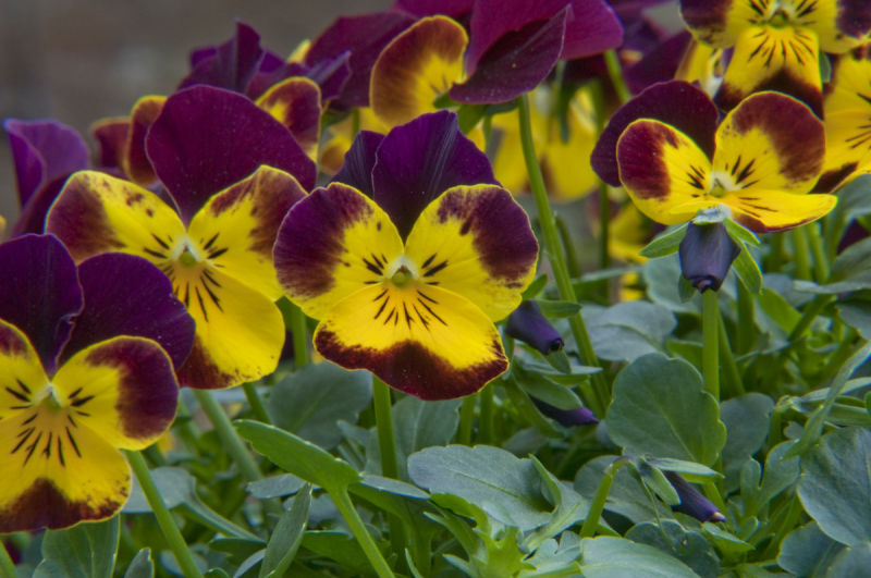 More violets