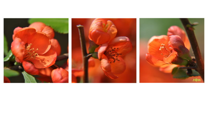 Orange triptych