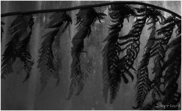 fern shadows
