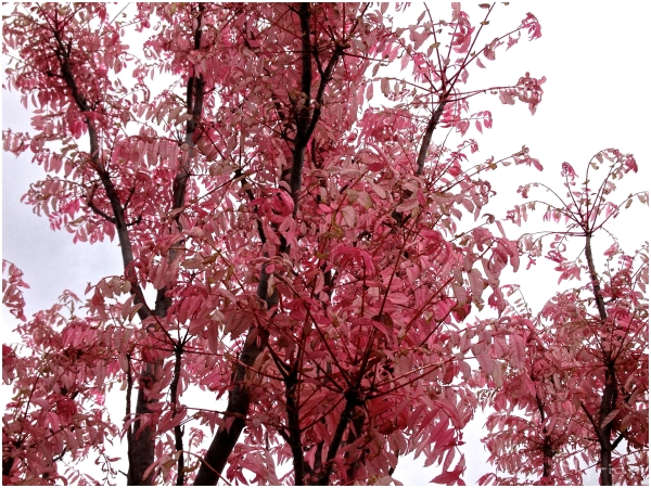 Mysterious Pink Tree