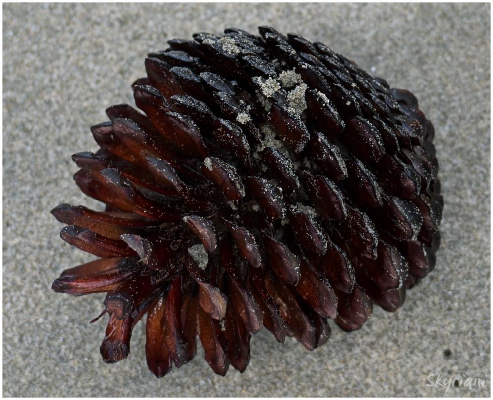 Beach cone